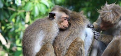 monkey-2360018