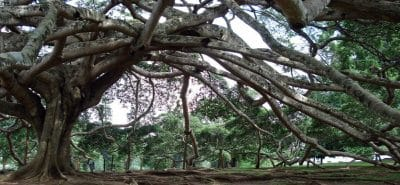 Kandy Jardin botanique