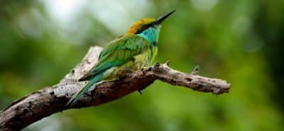 Oiseaux du Sri Lanka