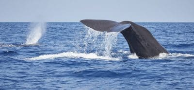 baleines sri lanka mirissa
