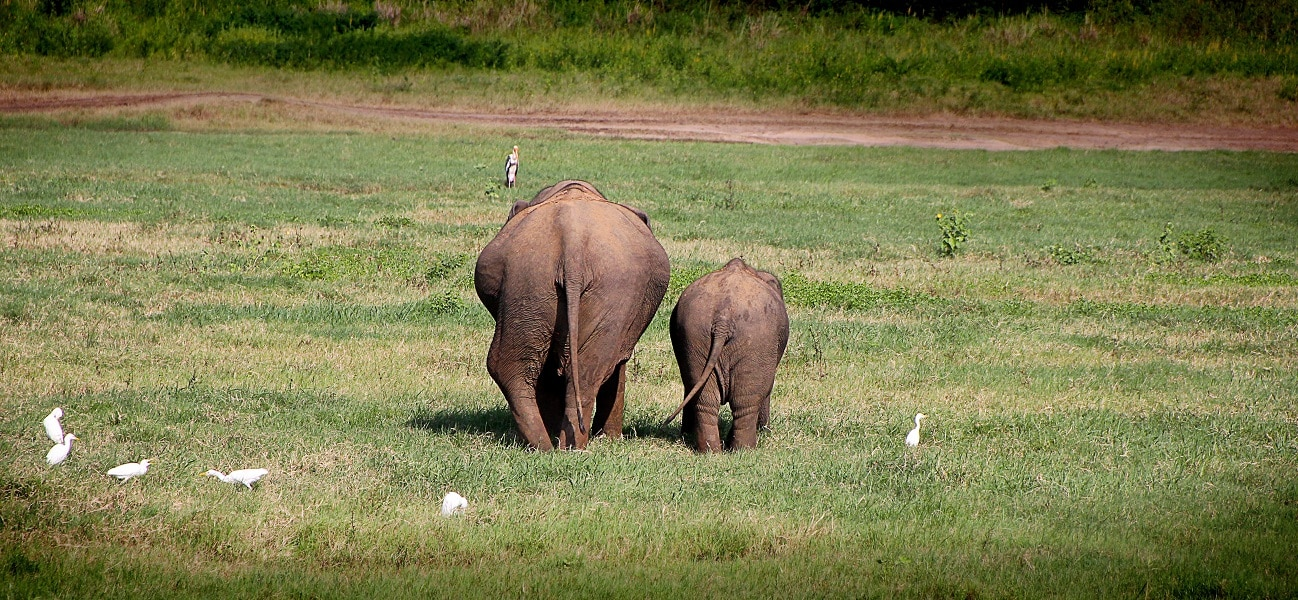 elephant-2130817
