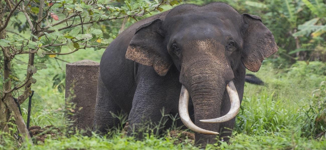 elephant-2272704_1920