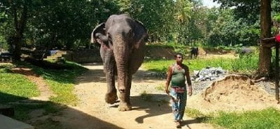 millennium-elephant-foundation (1)