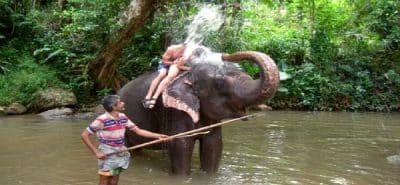 millennium-elephant-foundation